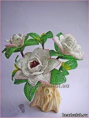 Цветок гардения