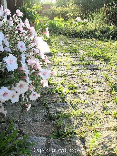 kostka granitowa, ogród przydomowy, ogród za grosze