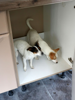 Both puppies inside the kitchen unit
