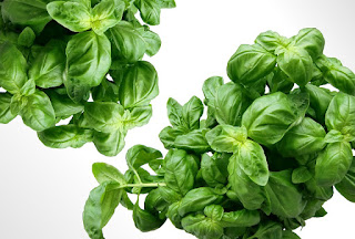 Basil,Tulsi Herb name in different Indian languages (regional)