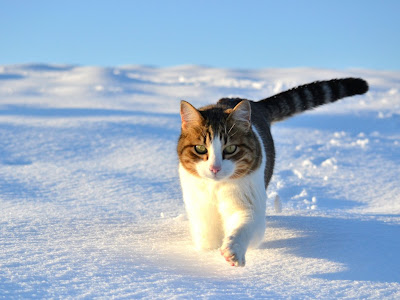 cat normal resolution hd wallpapers 26