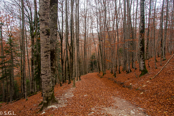 La Selva de Irati. Sendero del bosque de Zabaleta
