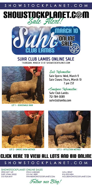 ShowStockPlanet: Closing Tonight: Suhr Club Lambs Online Sale
