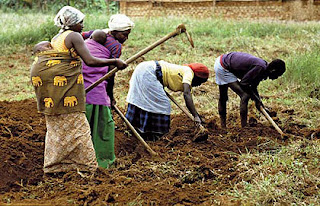 Agriculture Opportunities In Cross River State Africa 2BFarmers