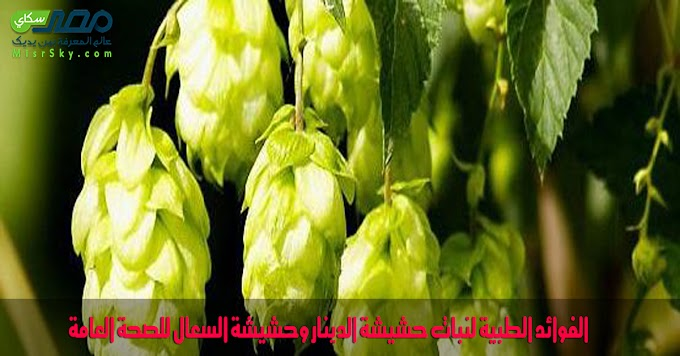 الفوائد الطبية لنبات حشيشة الدينار وحشيشة السعال للصحة العامة