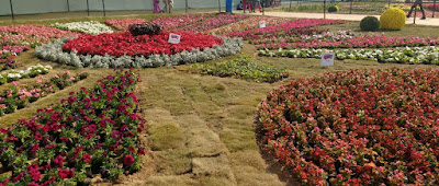 flower show ahmedabad