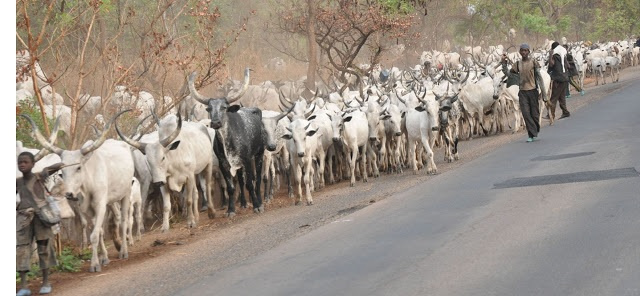 Cows, Fulani herdsmen take over Owerri Airport runway, plane aborts landing