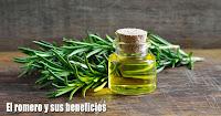 https://steviaven.blogspot.com/2018/06/el-romero-potente-hierba-beneficios-medicinales.html