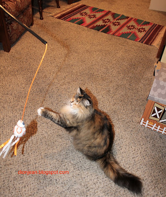 Blind cat swatting at toy