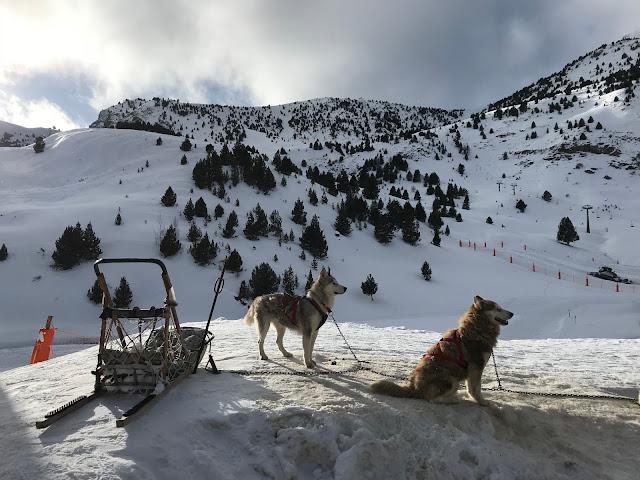 Trineo tirado por perros en paisaje montañoso nevado