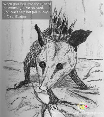 RescuedPossum-Fonda'sAnimalPhotoChallenge-HuesnShades