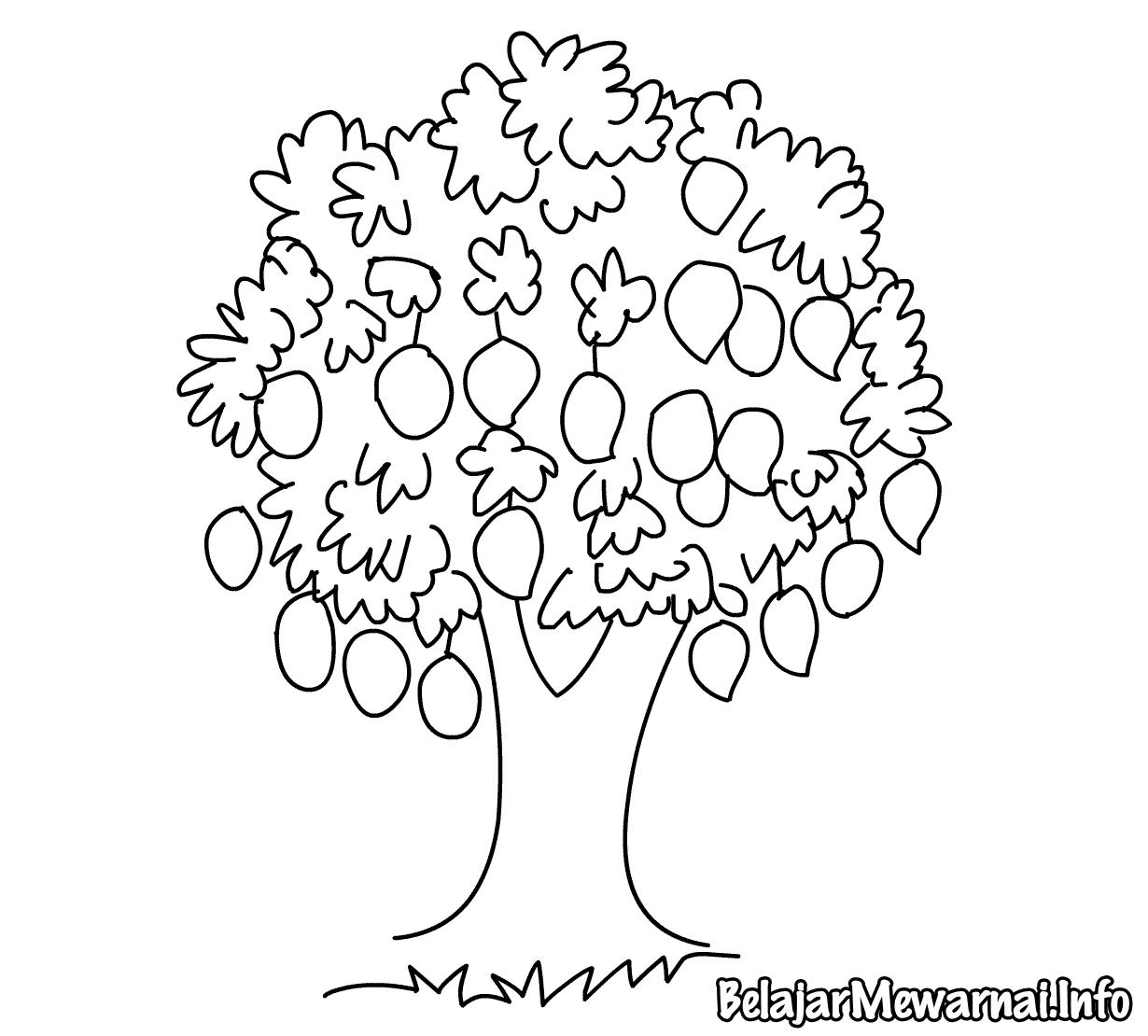 Sketsa Gambar Pohon Mangga