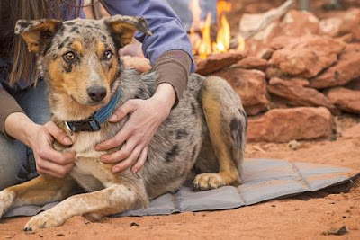 Travel Accessories For Your Dog Australian Dog Lover
