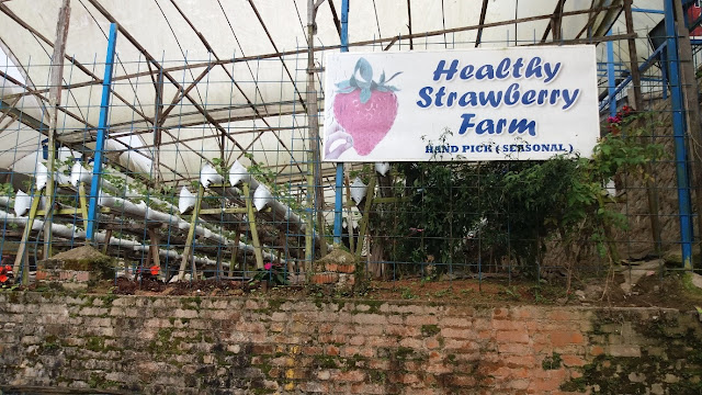 Health Strawberry Farm
