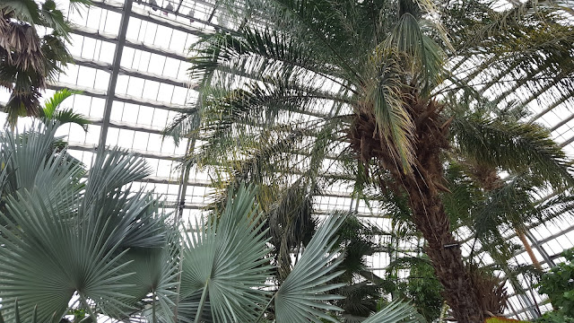 Take a look at Chicago's beautiful Garfield Park Conservatory by Musings of a Museum Fanatic