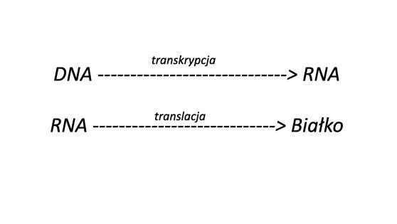 ekspresja DNA