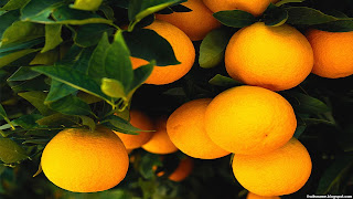 valencia orange fruit images wallpaper
