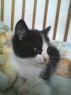 Stare zdjęcia mojego kotka - Jeżyka