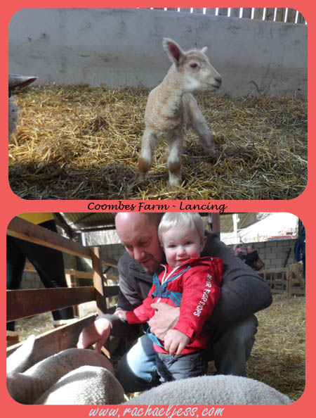 Lambing Season at Coombes Farm
