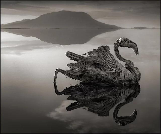 जो इस झील में गया वो पत्थर बन गया