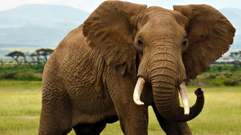 Αποτέλεσμα εικόνας για Ελέφαντας blogspot