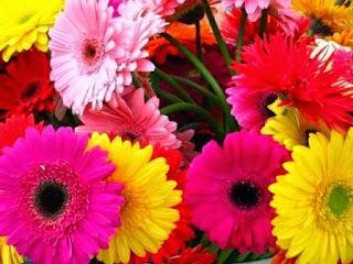 bunga-gerbera-surabaya32