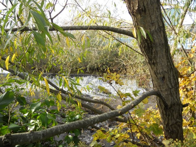 Walk the River Dodder in Dublin -Foliage