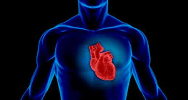 Os cientistas estão explorando uma ampla gama de opções para reparar os órgãos – Reprodução