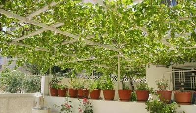 بالفيديو مشروع زراعة أسطح المنازل للخبيرة مها مرعى