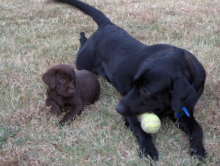 Buddy and puppy Jenny