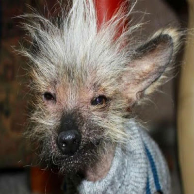Fotos-dos-cachorros-mais-feios-do-mundo