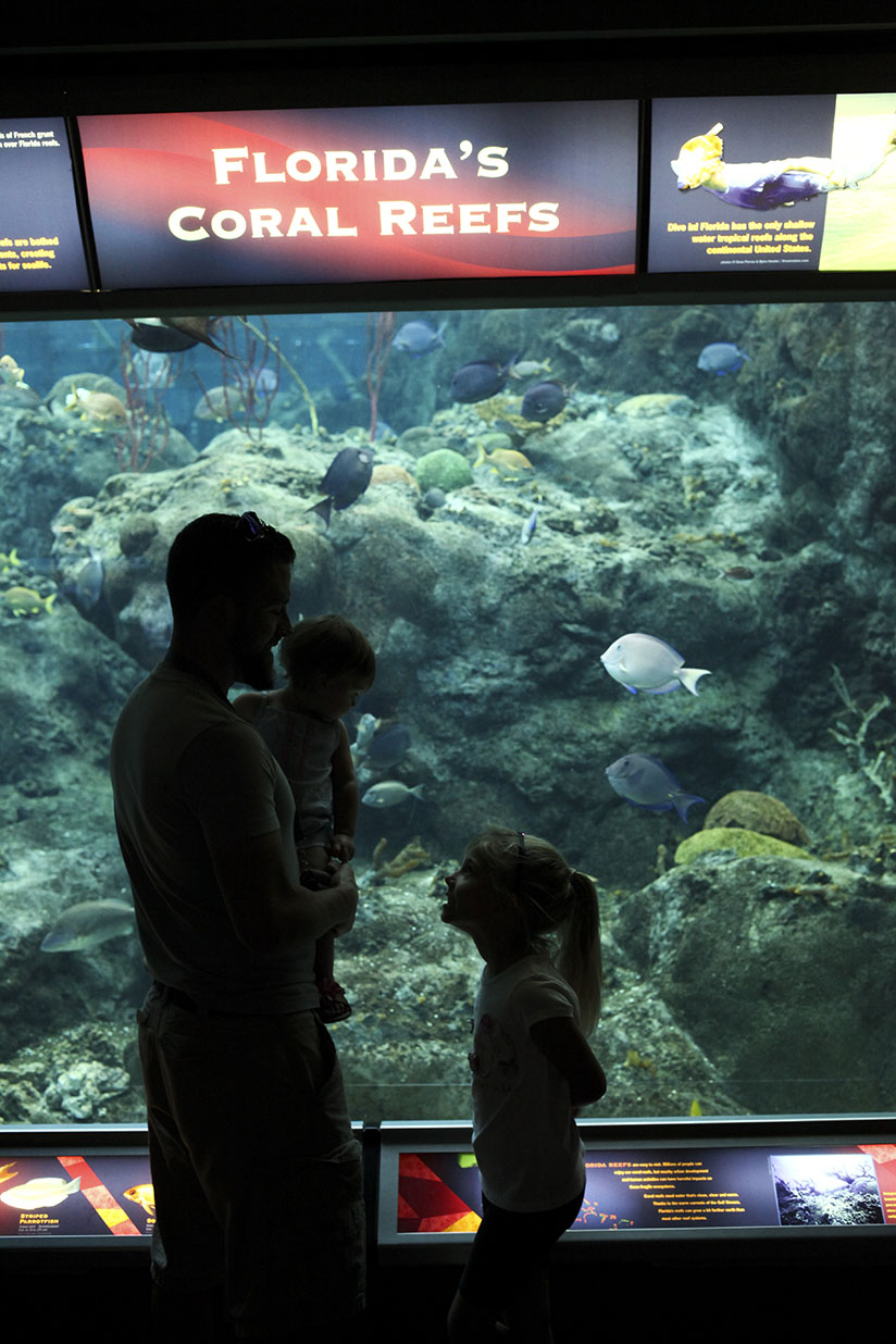 Dad and daughters look at the coral reef gallery at The Florida Aquarium