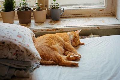 Gatico lindo durmiendo