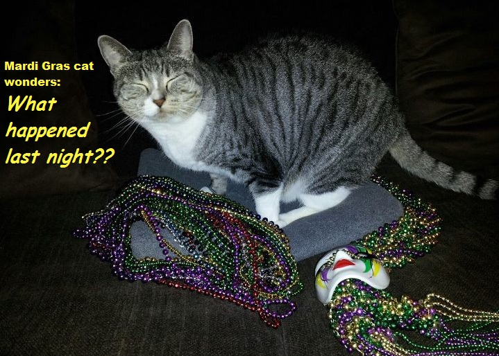 Image result for Fat cats Fat Tuesday
