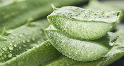 Usage of Organic Aloe Vera Products