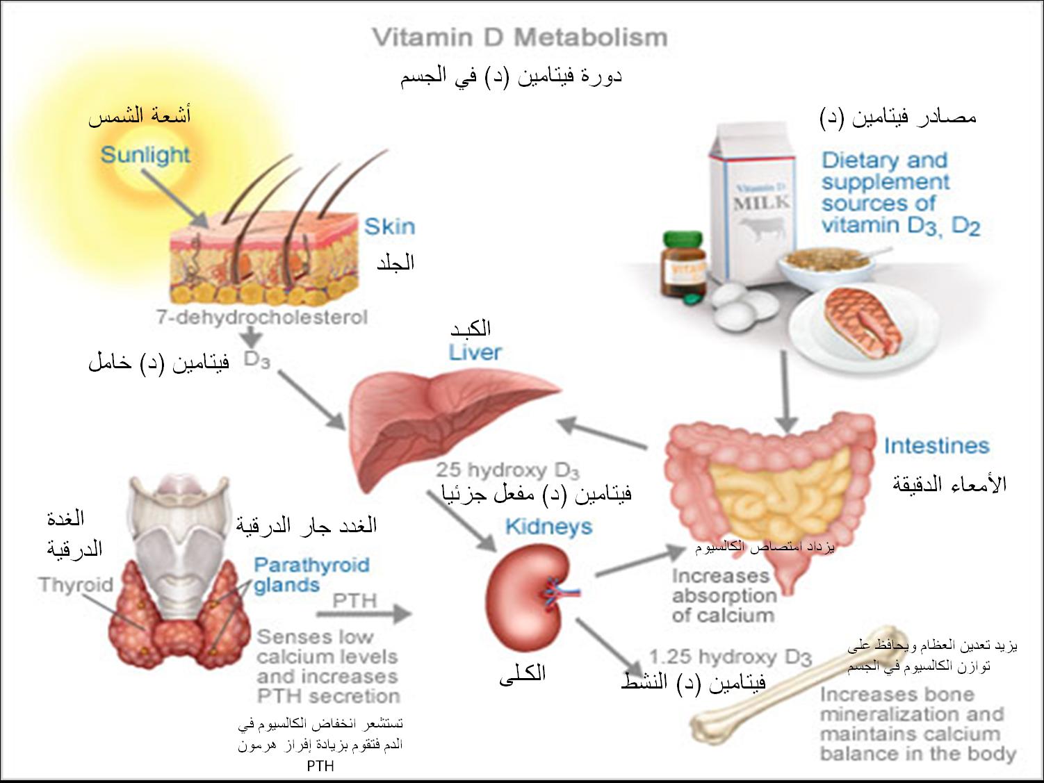 أعراض نقص فيتامين دال