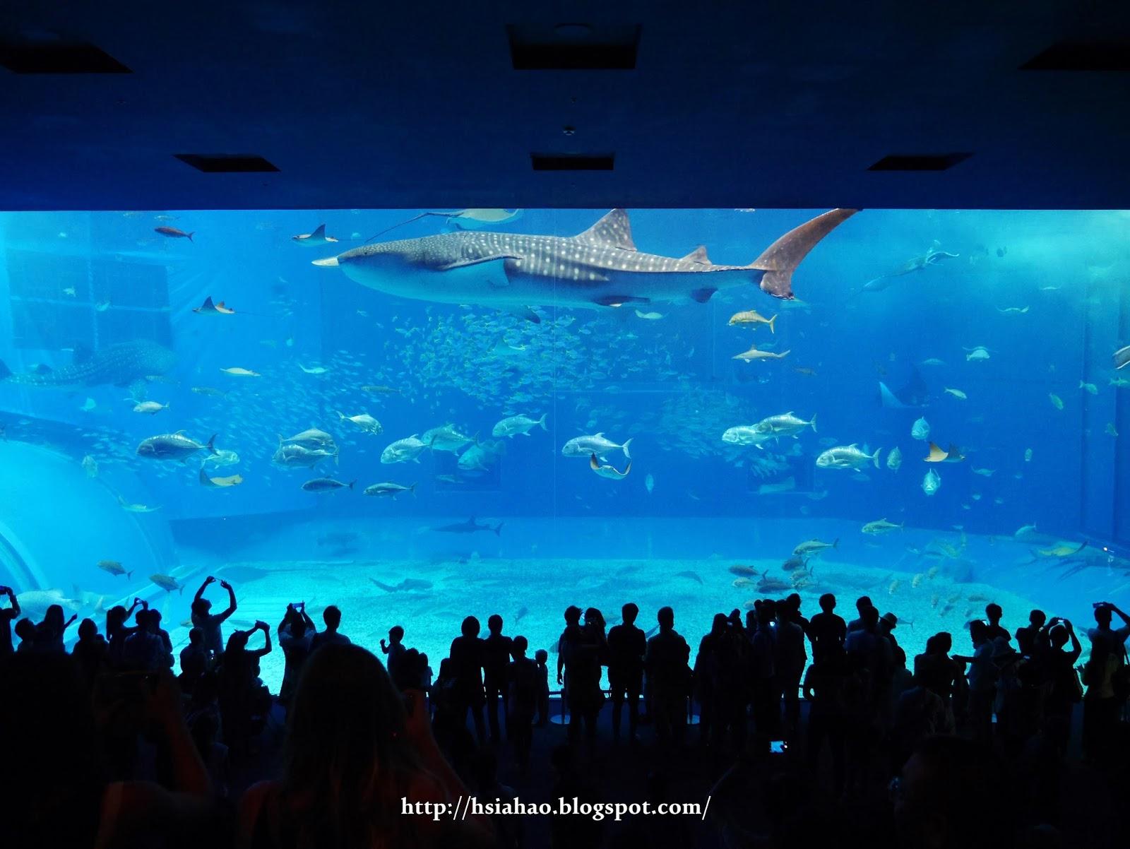 沖繩-美麗海水族館-自由行-旅遊-景點-Okinawa-hip-hop-bus