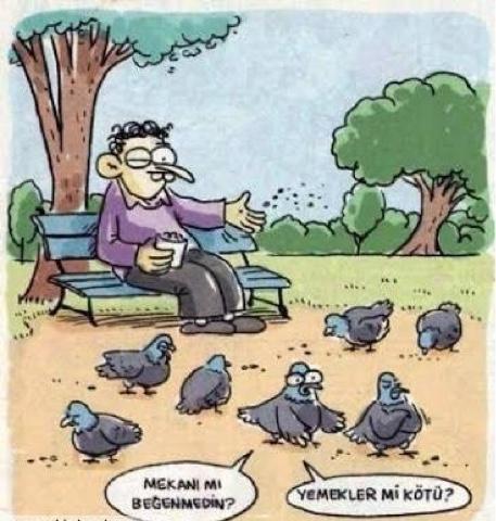 dişi kuş