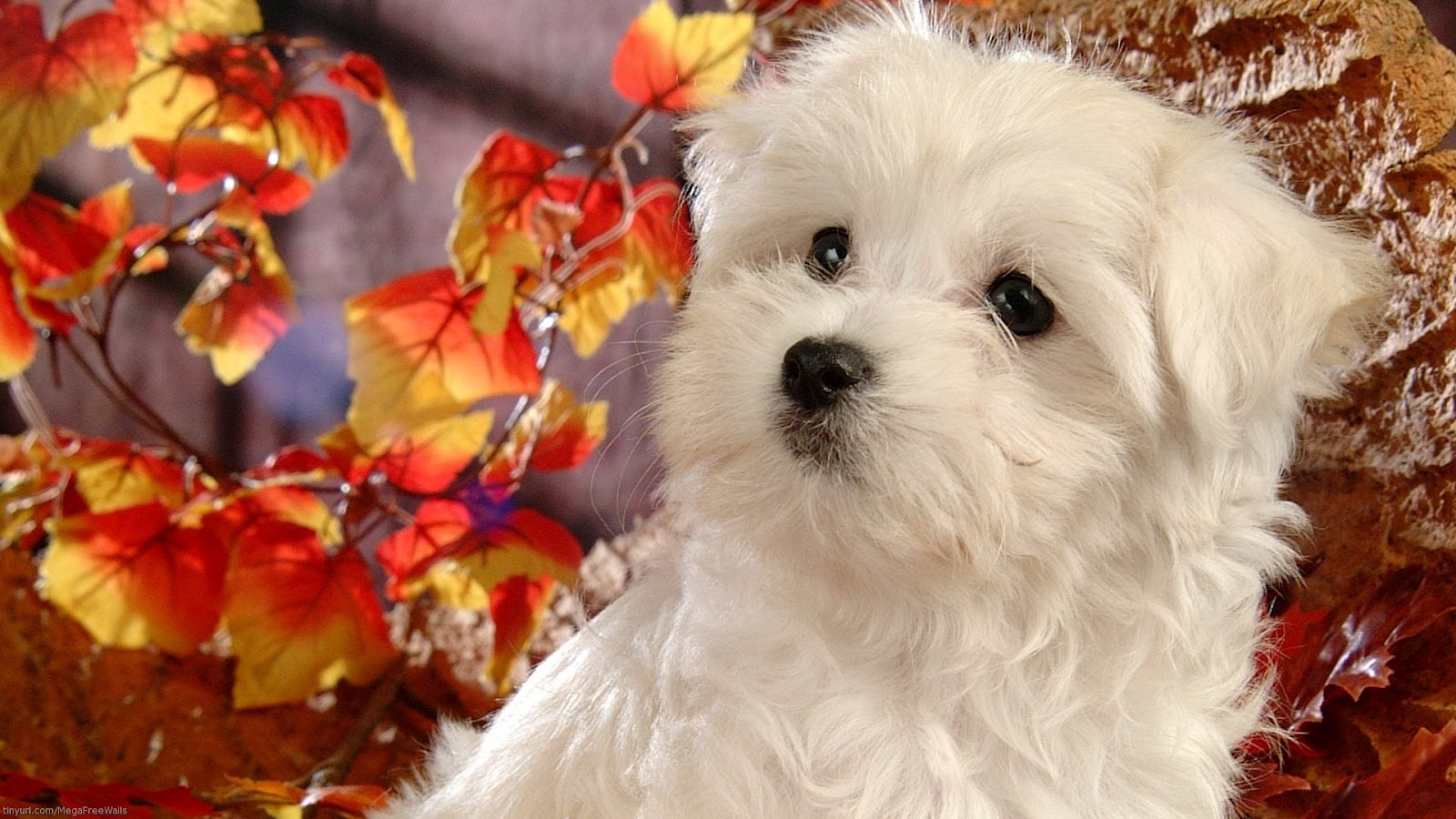 Very Cute Puppy Wallpapers Wallpaper Collection For Your Computer And Mobile Phones