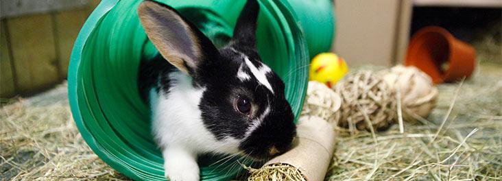 Pet Rabbit Toys Diy
