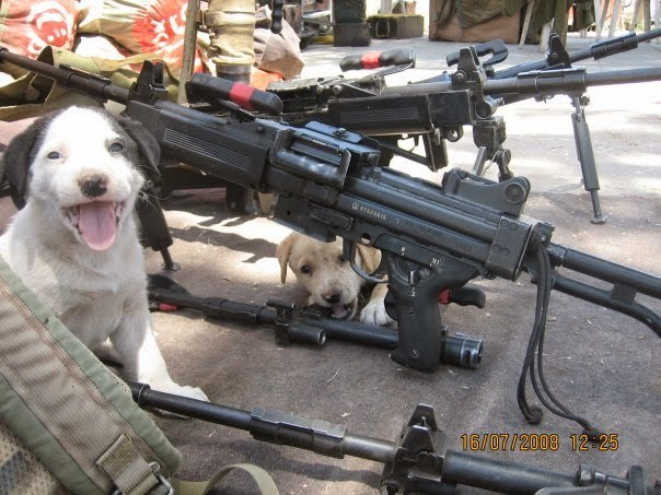 funny dog pics with guns - photo #4