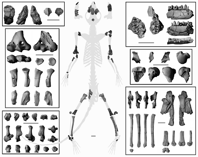 Fossil skeleton confirms earliest primates were tree dwellers