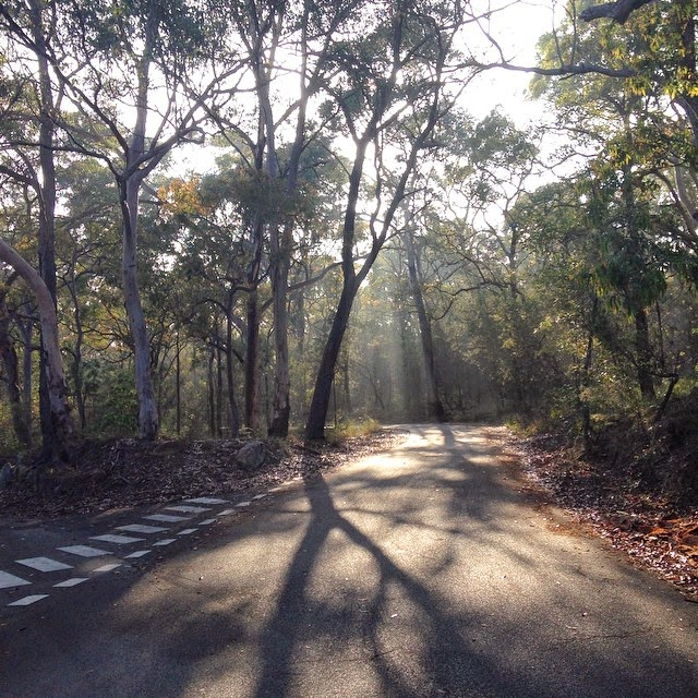 Sunlight streaming through the trees at Oatley Park
