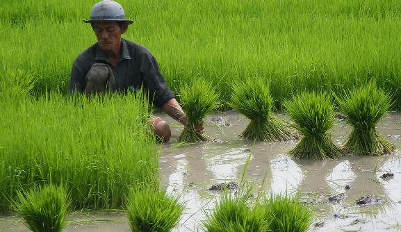 Komunitas Pertanian Indonesia