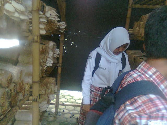 Siswa Sedang Memantau Jamur Tiram