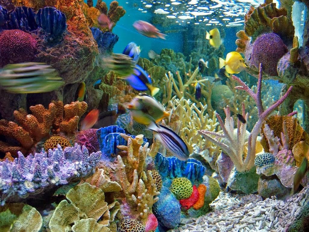 Gambar Pemandangan Di Dasar Laut Image Gallery gyps