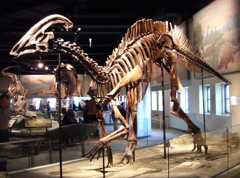 دراسة تفيد العثور على أوعية دموية لحفريات عمرها 80 مليون عام