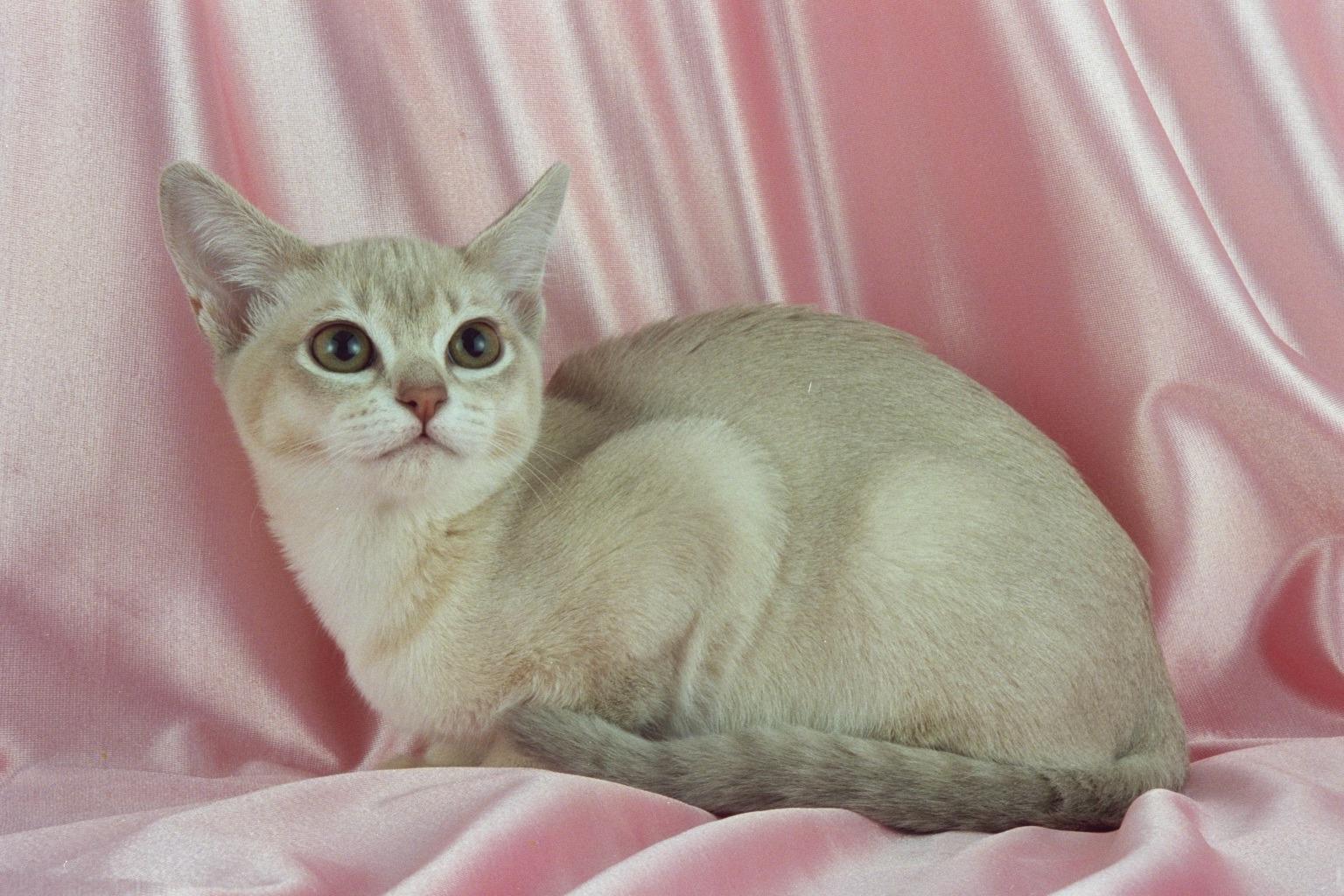 Most Playful Cat Breeds