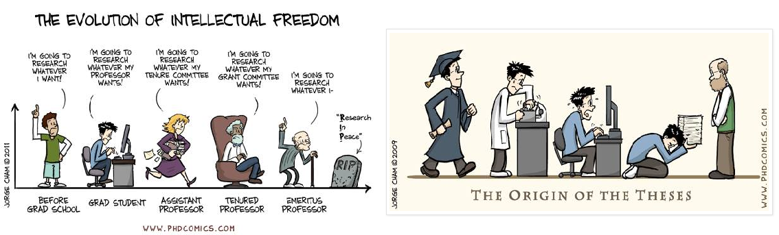 Thesis de doctorat