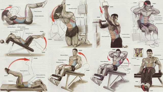 biceps and abdominal training